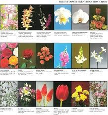 Online Flower Identification Metropolitancollege Org