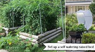 set up a self watering raised bed