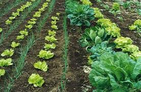 Resultado de imagen para agricultura biologica