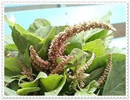 Amazon Com 5g Amaranthus Spinosus Fresh Seeds Spiny