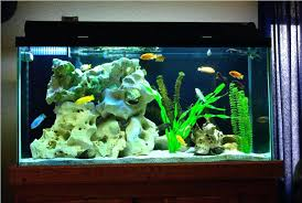 fish tank lighting ideas. Home Aquarium Ideas Fish Tank Lighting