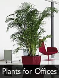 office pot plants. Plants For Offices Link Office Pot D