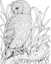 Small Picture 171 best images on Pinterest Free printable Owl