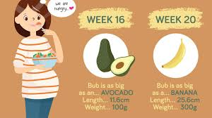 Pregnancy Child Growth Chart Baby Growth Chart How Big Is Your Baby This Week Infographic