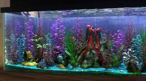 creative fish tank decorations