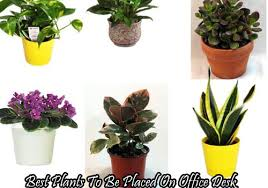 great office plants. Cheap Office Desk Plants Best Picks. Great L