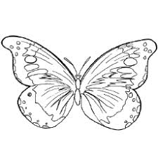 Select from 35602 printable coloring pages of cartoons, animals, nature, bible and many more. Top 50 Free Printable Butterfly Coloring Pages Online