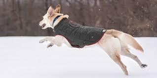 9 Best <b>Dog Coats</b> in 2019 - For <b>Winter</b> and <b>All</b>-season   Gooddogsco ...