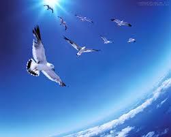 Aquazulis ira virar poesia no céu