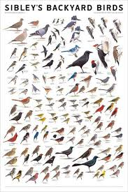 Uk Garden Birds Chart Yahoo Image Search Results Nature