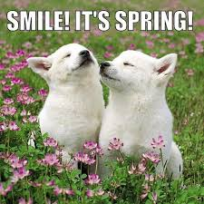 Image result for happy spring animals