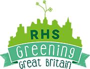 Verbascum boerhaavii | annual mullein/RHS Gardening