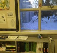 classroom window. Deer Jumps Through Grade 5 Classroom Window In Saskatchewan N