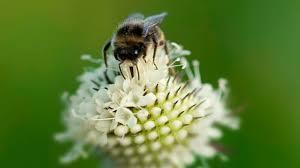 Il fiore che salva le api | LifeGate