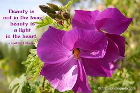 Purple Flower Quotes Flower Photo Quoto