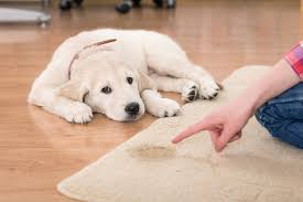 how to get pet smells out of carpets