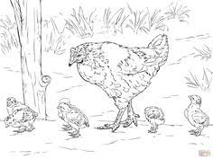 Small Picture Hen Chicks Coloring Colorinenet 16692 chickens Pinterest