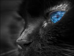 black wolf with blue eyes wallpaper. Exellent With Bright Colors Images Blue Eyes HD Wallpaper And Background Photos With Black Wolf Wallpaper S