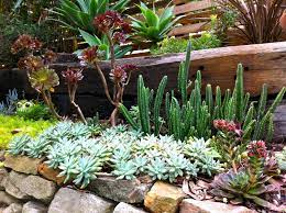 low maintenance plants that will bloom