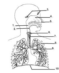 17 best images about science spec ed on pinterest respiratory on simple circuit diagram quiz