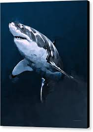 great white shark painting. Interesting Great The Great White Shark Canvas Print Featuring The Painting  By Scott Wallace For Painting