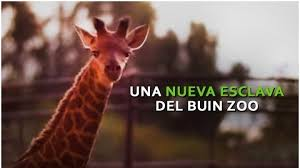 The buin zoo is a fantastic bargain on the outskirts of the santiago metro area. Petition Update Una Nueva Esclava En El Buin Zoo Change Org