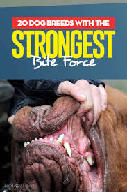 20 Dog Breeds With The Strongest Bite Force And How Its