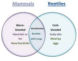 Difference Between Amphibians And Reptiles Venn Diagram Learning Ideas Grades K 8 Mammals And Reptiles Venn