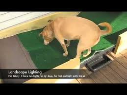 diy dog potty