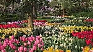 keukenhof 2018 22 april 2018 beautiful garden