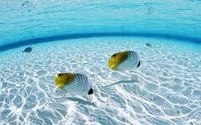 46+] Underwater Desktop Wallpaper on ...