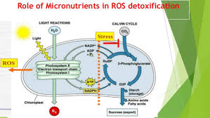 Mulders Chart Role Of Micro Nutrients And Their Deficiency Symptoms In