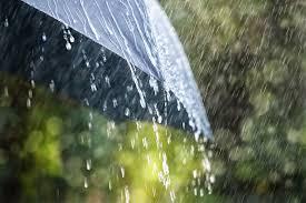 rainy day bugs