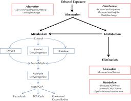 Alcohol Metabolism Chart Ethanol Pharmacokinetics In Neonates And Infants Sciencedirect