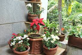 Small Picture Indian Garden Design Ideas crowdbuild for