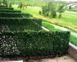 Ivy screen