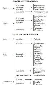 Bacteria Classification Gram Staining Principle Procedure And Results Learn