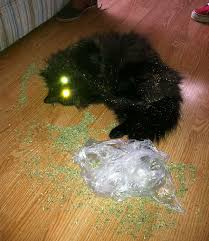 Image result for catnip