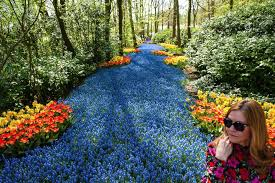 photo keukenhof one of the worlds largest flower gardens in lisse the netherlands