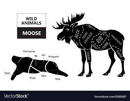 Cut Of Elk Set Poster Butcher Diagram Desert