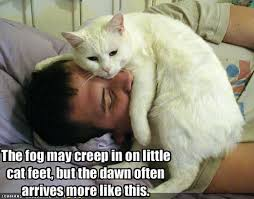 Image result for funny sunday cat images
