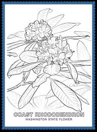 Small Picture state flower coloring pages Archives United States of America