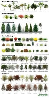 Plants Shape Chart