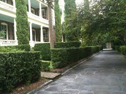 This side yard (considered the home's front yard in Charleston) has a  driveway paved in slate, and a series of hedges to separate the drive from  the ...