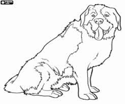 Disegni Di Cani Da Colorare E Stampare Topcoloring