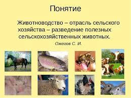 Презентация Животноводство класс скачать бесплатно  Животноводство отрасль сельского хозяйства разведение полезных сельскохоз
