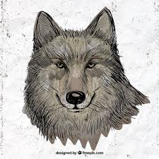 Drawn Wolf Hand Drawn Wolf Illustration Vector Free Download