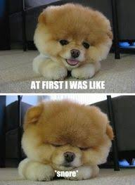 Just plain tired! on Pinterest | Monday Again, Puppys and Chow Chow via Relatably.com