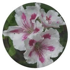 flower paper plates flower paper plates paper plate zazzle com