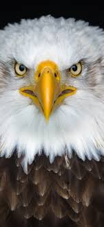 brown feathers, beak, eyes ...